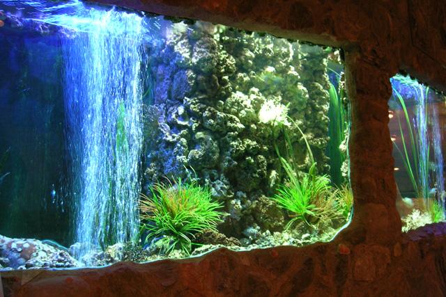 Acquario d acqua dolce arredamento odissea delle piante d for Acquario arredamento