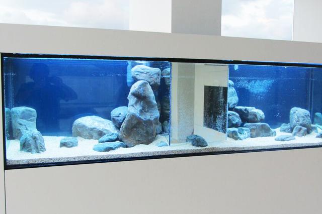 Arredo acquario acquari privati e aziende acquario for Acquario arredamento
